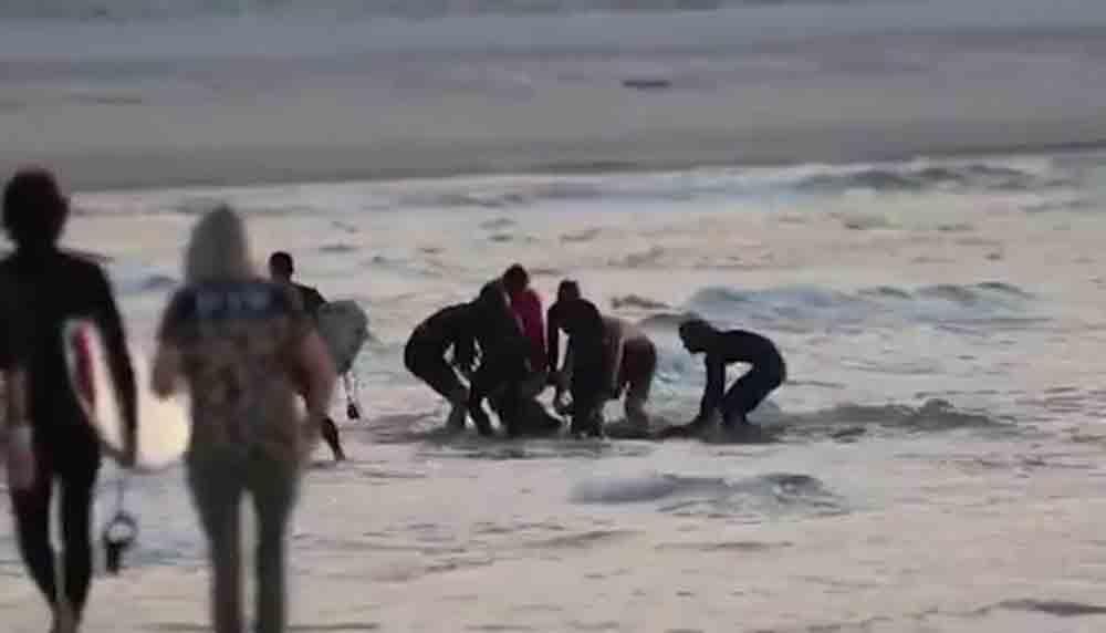 Tubarão atravessa rede de proteção e mata surfista de 46 anos, veja o vídeo. Foto: reprodução Twitter