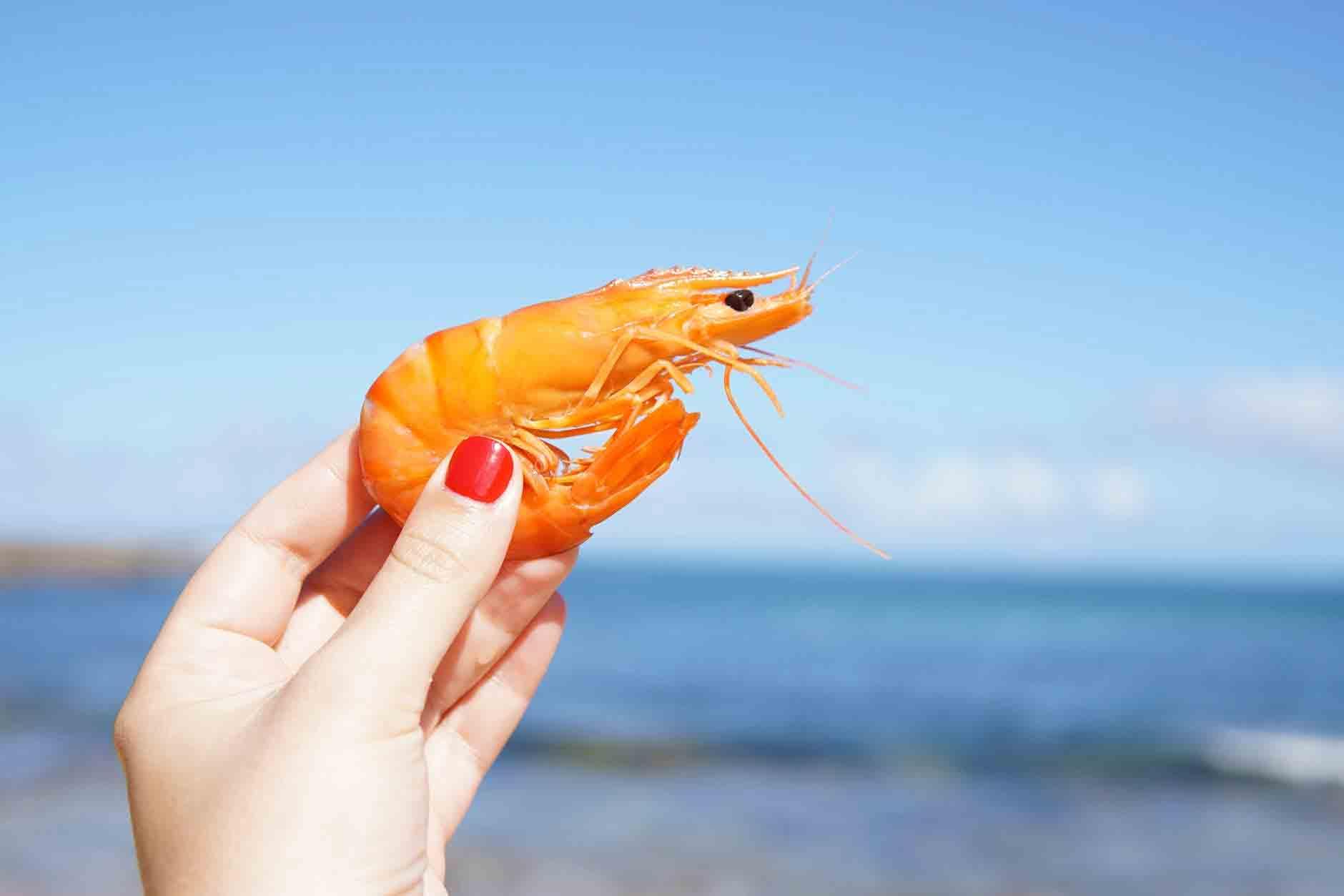 Saiba como escolher camarão. Foto: pexel